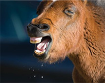 Presentation On Respiratory Disease In Horses
