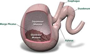 gastrocopy