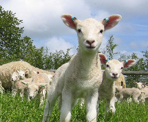 Lambing Workshop